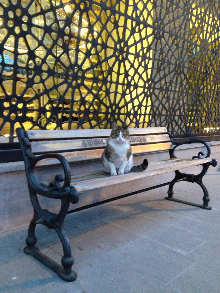 Requisite cat picture in front of the mosque's exterior metalwork (Credit: S. )