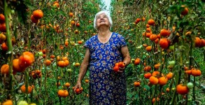 Tolga Sezgin Mari Aydın gathering tomatoes in a greenhouse in Vakıflı, one of the few Armenian villages remaining in Turkey. The village has been practicing organic farming since 2004. Antakya, 2008 (On The Road Exhibition)