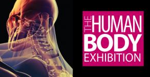 The Human Body Exhibition @ Istanbul Aquarium - Yabangee