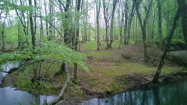 iğneada forest