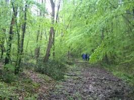 iğneada path