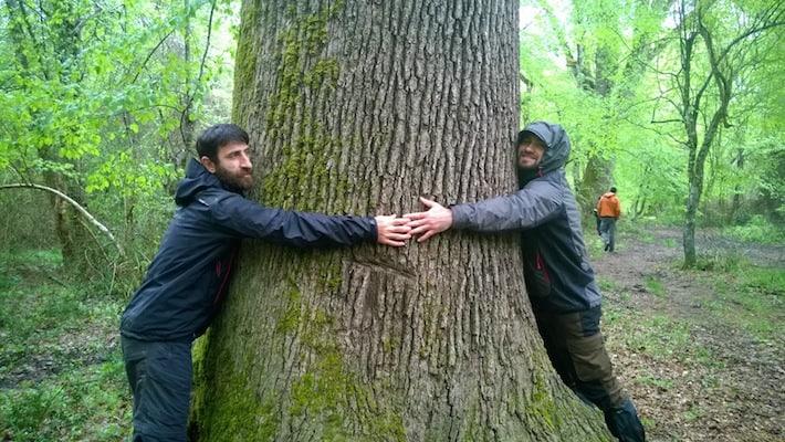 iğneada tree hugging