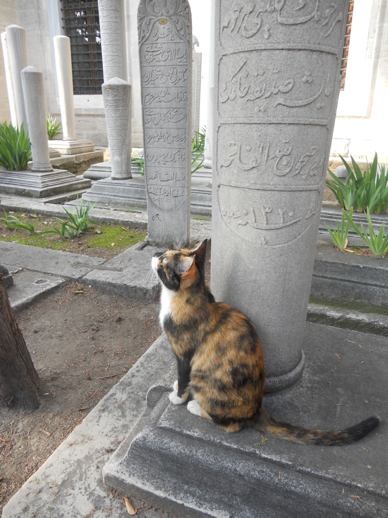 cat personalities of Istanbul